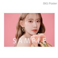 【예약 종료】 미야 와키 사쿠라 졸업 콘서트 ~Bouquet~ B2 포스터 B (소책자 아자 컷) BIG Poster