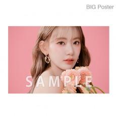 【예약 상품】 미야 와키 사쿠라 졸업 콘서트 ~Bouquet~ B2 포스터 B (소책자 아자 컷) BIG Poster